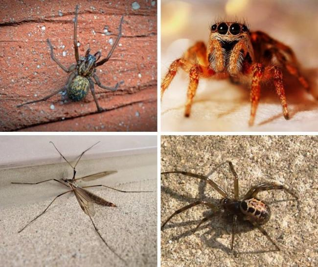 This is why you may have seen more spiders in your home