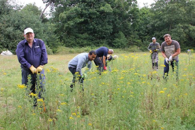 The team hard at work removing Ragwort.