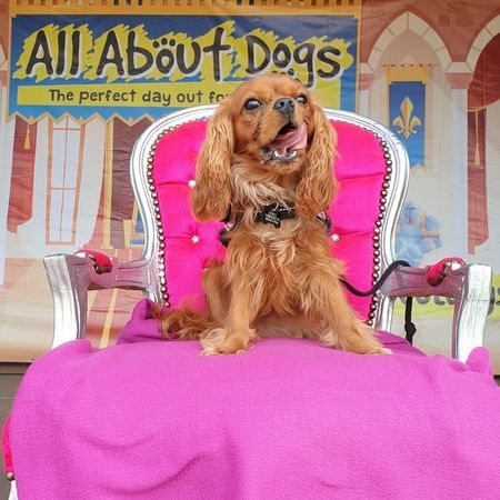 All About Dogs Show Hylands 2020