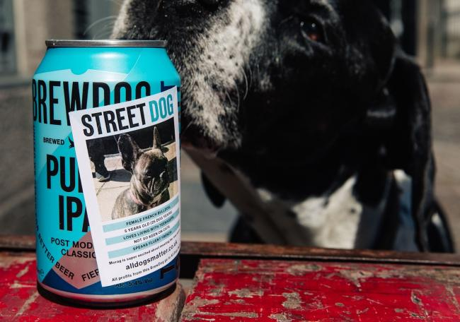 BrewDog creates new 'Street Dog' beer to help rescue dogs find a new home. Picture: BrewDog
