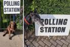 Send us your photos of pups waiting at polling stations across Essex
