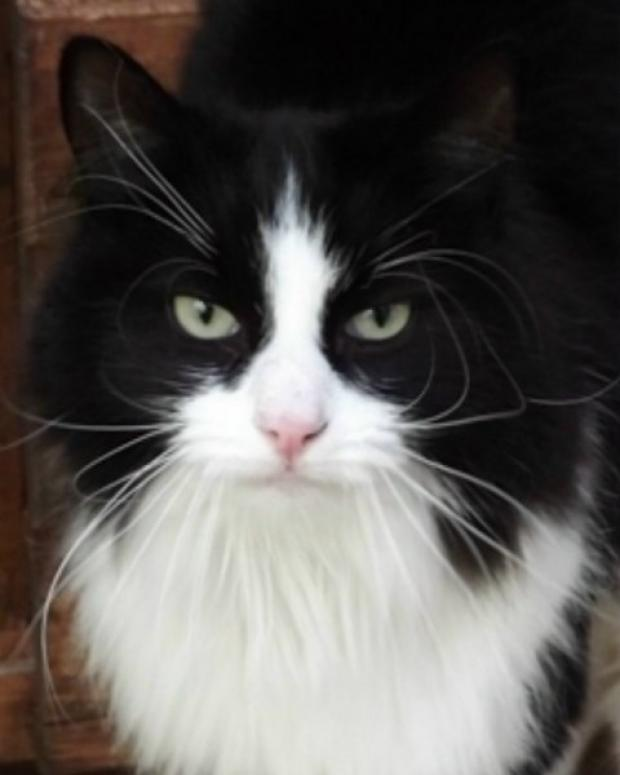 Maldon district: Concerns raised over whereabouts of black and white pets