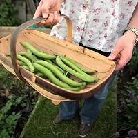 Almost a third of adults are now growing their own food, according to a poll