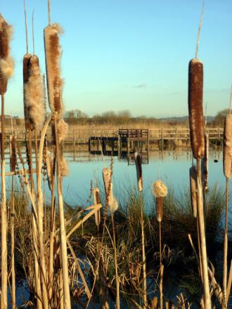 A wetland in Avon. Could something like this help ease flooding pressures in Heybridge?