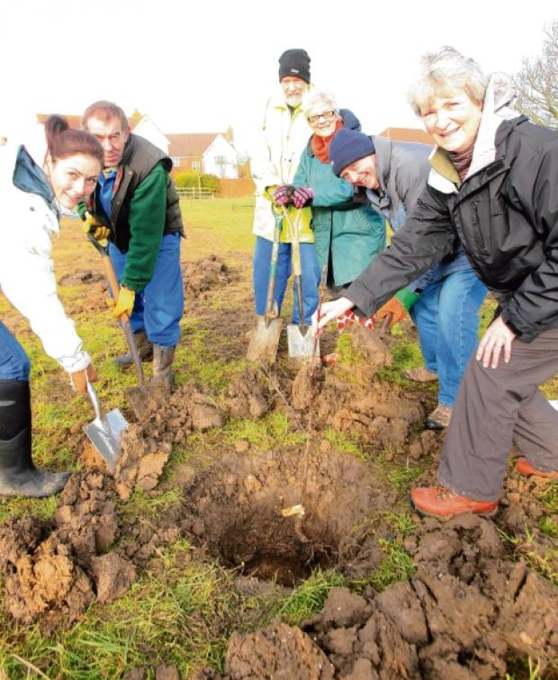 Southminster: Community orchard to bear fruit for villagers