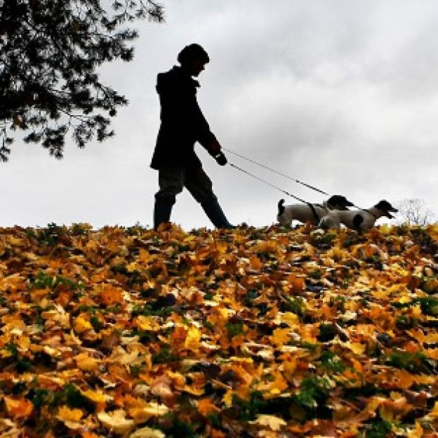 Maldon and Burnham Standard: Dog owners in the New Forest have been warned of the threat of disease after a number of pets died