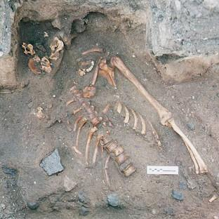 The skeleton of a young man dating from the the 12th or 13th centuries, which was found during an archaeological dig at the Scottish Seabird Centre in North Berwick (Historic Scotland/PA)