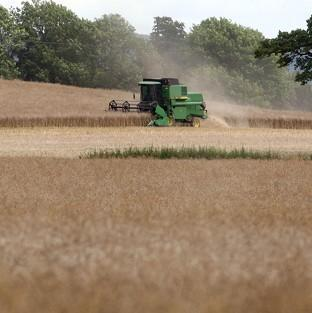 A report shows UK agriculture's contribution to the economy increased by 54% between 2007 and 2012
