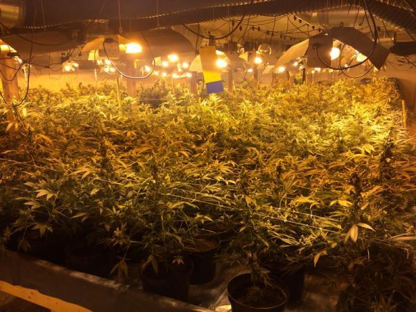 Drug dealer jailed after £3million cannabis discovered at former chicken farm