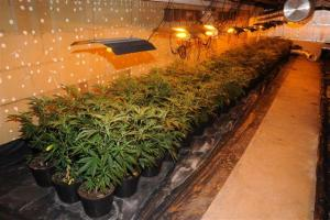 Police discover giant £400,000 cannabis factory in Burnham