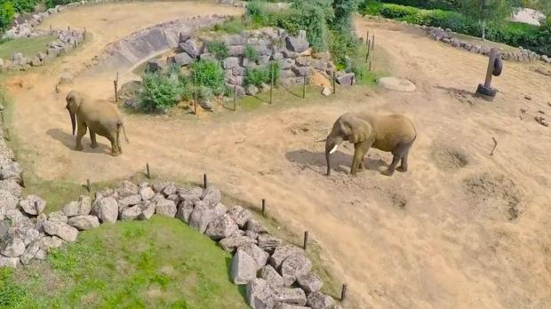 Maldon and Burnham Standard: Spotted - Elephants in their enclosure at Colchester Zoo.