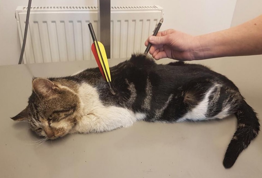 Campaigner calls for change in law after cat is show with bow and arrow