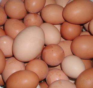 Maldon and Burnham Standard: Shopkeepers ban youngsters from buying eggs