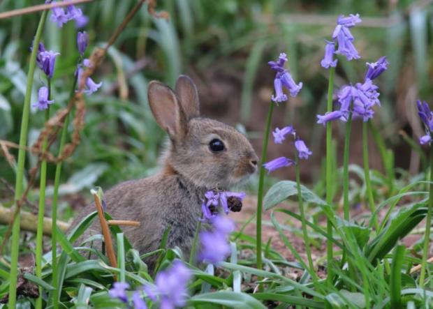 Maldon and Burnham Standard: Mark Aston, rabbit in Braintree